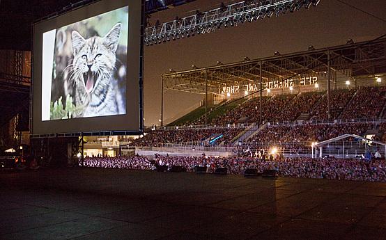 Internet Cat Video Festival 2013 at the Minnesota State Fair Grandstand